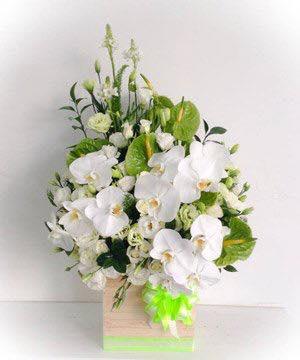 Hoa lan trắng thanh tao nhã nhặn