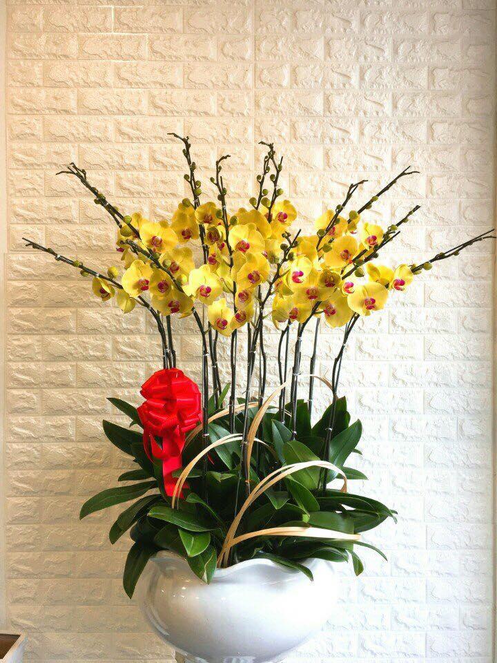 Mẫu hoa lan tuyệt đẹp và sang trọng
