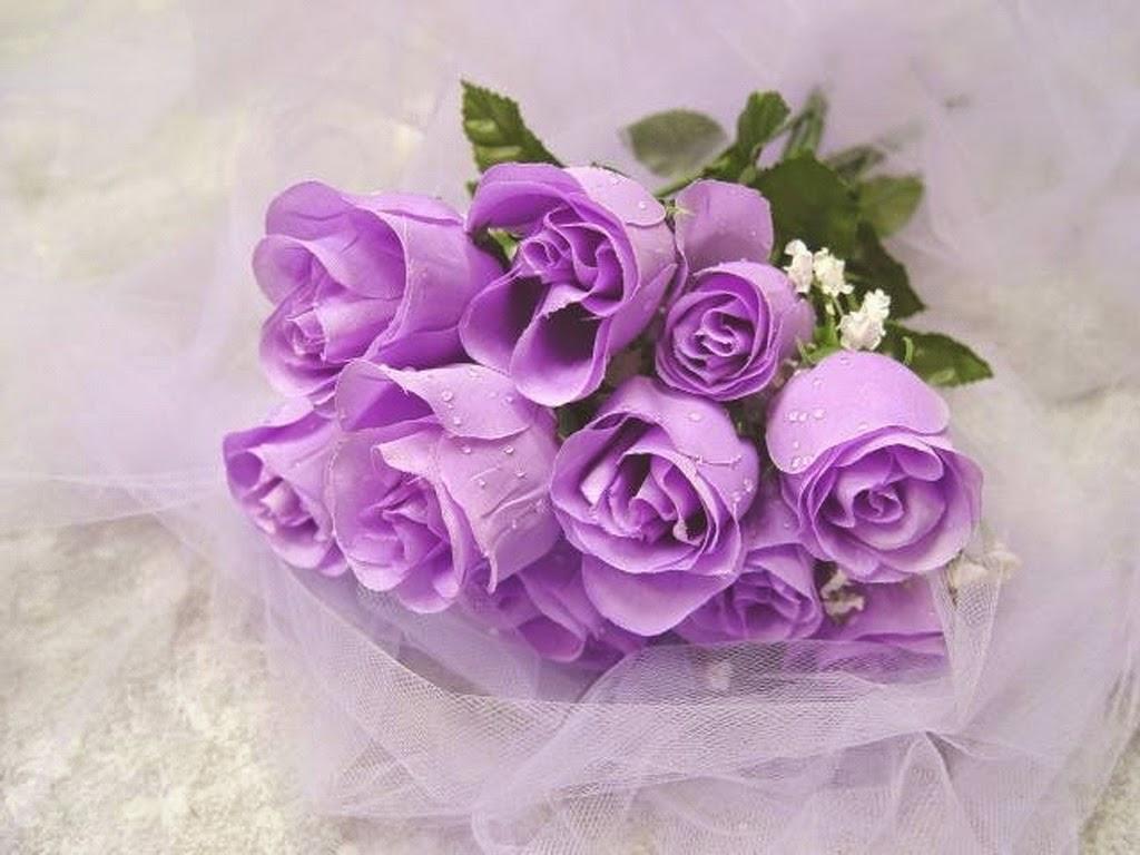 hồng song hỷ tím nhẹ nhàng lãng mạng