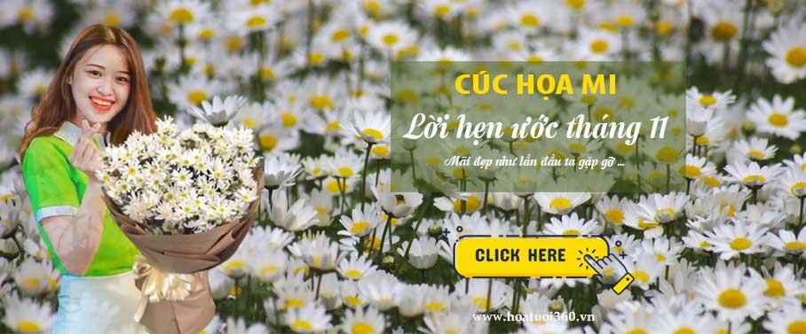 banner cuc hoa mi