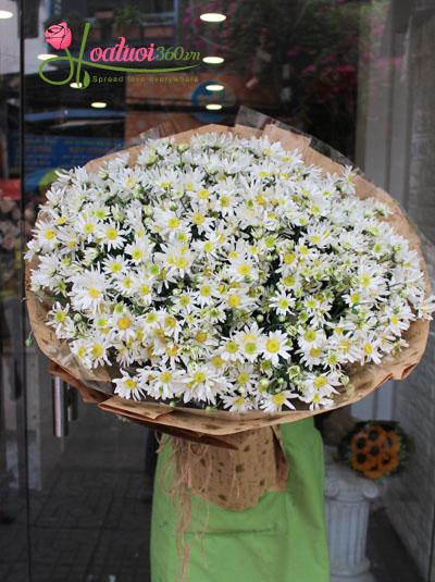 Bó hoa cúc họa mi- Hà nội trong tim em