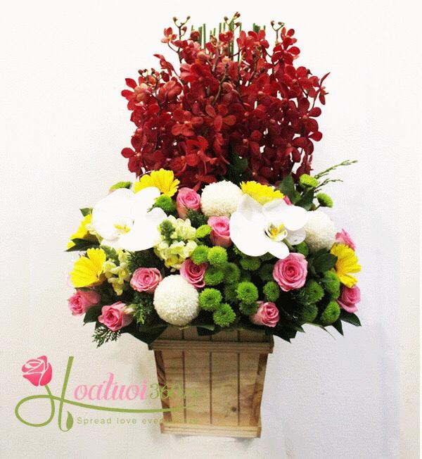 Hoa chúc mừng tone đỏ