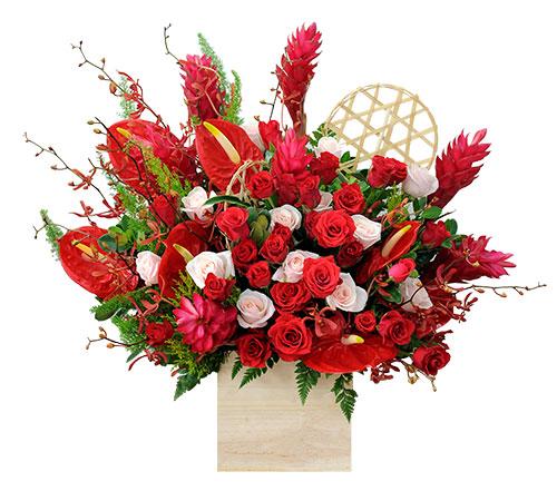Hoa giáng sinh- Mùa của yêu thương