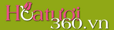 Hoa Tươi 360 | Dịch vụ hoa tươi, điện hoa uy tín