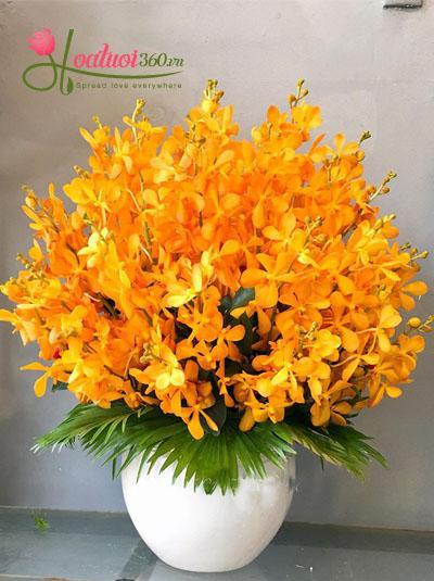 bình hoa lan Mokara vàng
