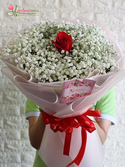 Bó hoa baby - Chỉ vì yêu em
