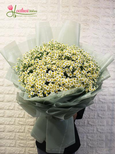 Bó hoa cúc tana - Dịu hiền