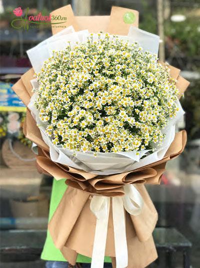 Bó hoa cúc tana-  Vẻ đẹp ngây thơ