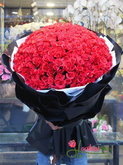 Bó hồng đỏ khổng lồ : Người Đàn Ông Bí Ẩn