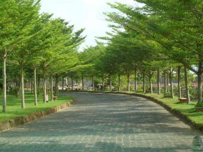 Cây bàng Đài Loan - Ứng dụng cây xanh cho công trình