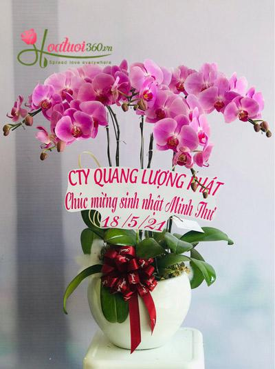 Chậu hoa lan hồ điệp hồng - Ngát hương