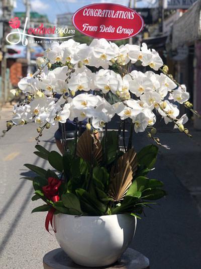 Chậu hoa lan hồ điệp - Mây trắng