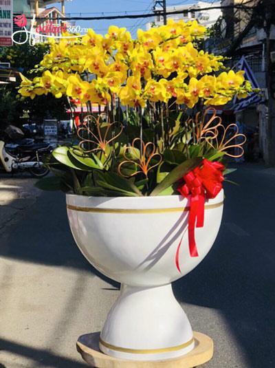 Chậu hoa lan hồ điệp vàng - Vẻ đẹp vĩnh cửu