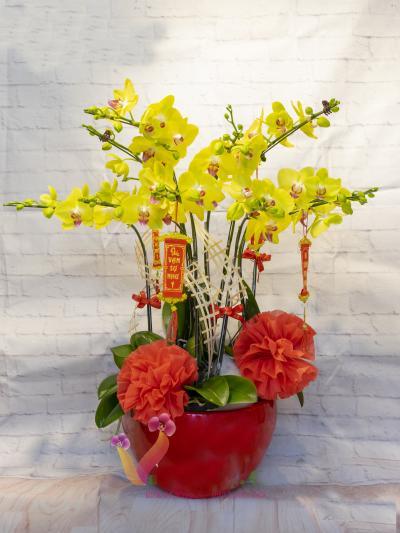 Chậu lan hồ điệp vàng 10 nhánh- Xuân sắc màu