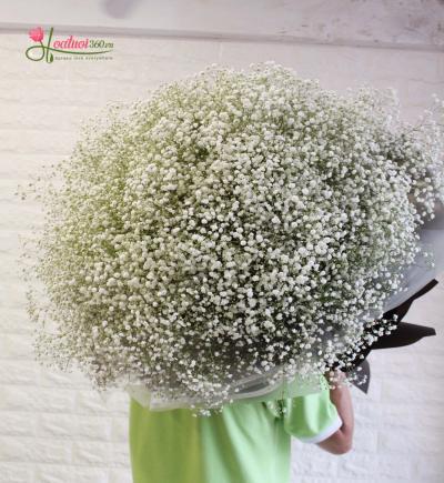 Chuyện tình bên loài hoa baby trắng