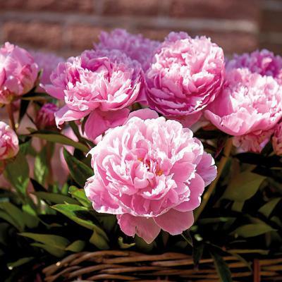 Điểm mặt 10 loại hoa đẹp nhất tại Việt Nam