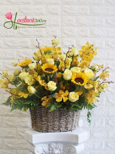 Giỏ hoa chúc mừng - Nắng vàng