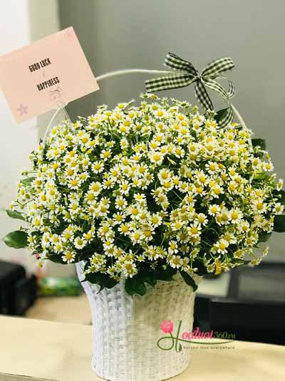 Giỏ hoa cúc tana xinh xắn