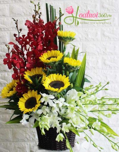 Giỏ hoa lan và hướng dương kết hợp