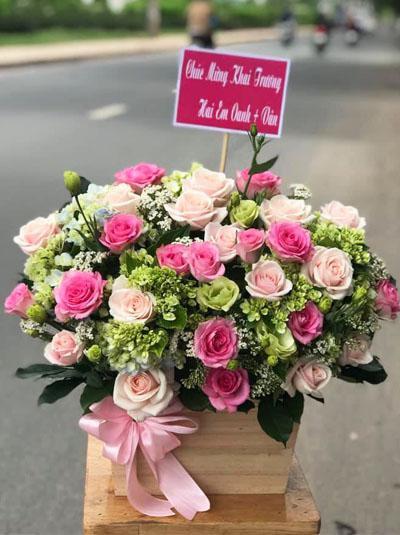 Hoa chúc mừng - Dáng xinh