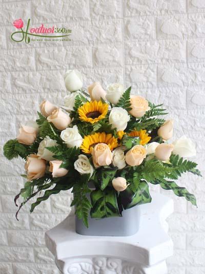 Hoa chúc mừng - Nắng mai