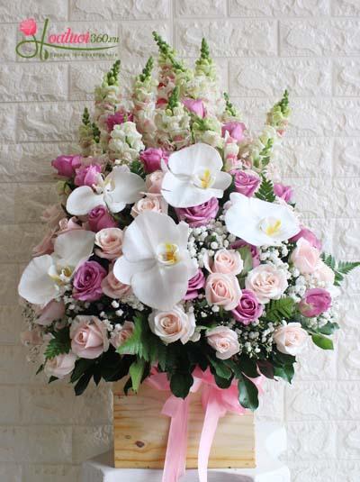 Hoa chúc mừng - Sự ngọt ngào