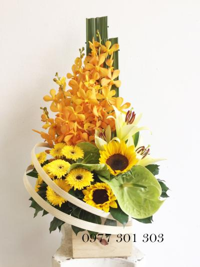 Hoa hộp gỗ - Nắng ban mai