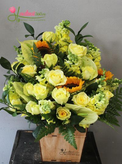 Hoa hộp gỗ- Sắc vàng thịnh vượng