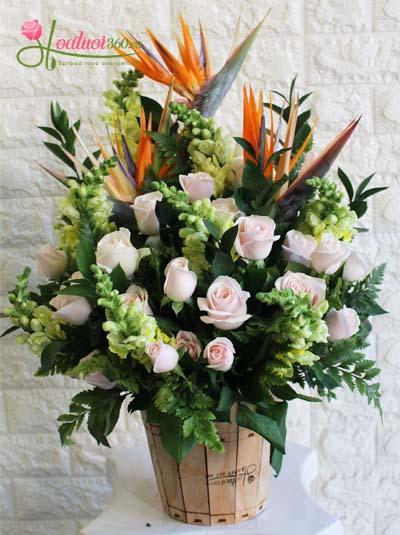 Hoa hộp gỗ- Vươn lên