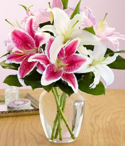 Hoa lily có mặt trên cõi đời này như thế nào?