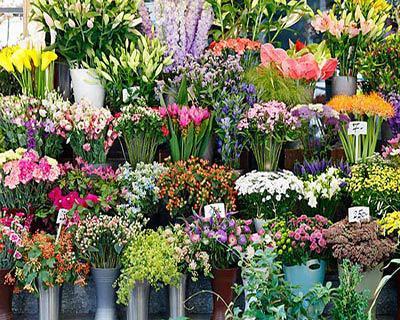 Nơi mua hoa tươi online uy tín - chất lượng
