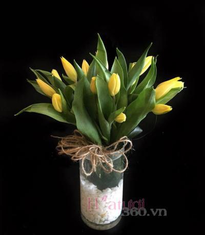 Hoatuoi360-hoa tulip 02