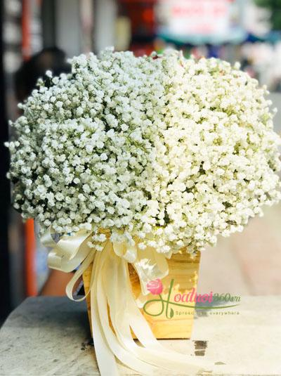 Hộp hoa baby - Ánh nắng của anh