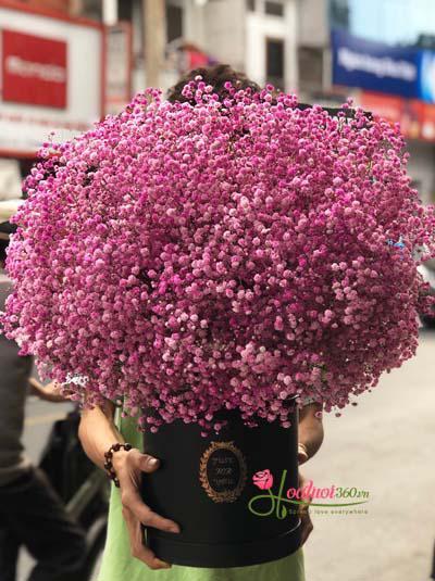 Hộp hoa baby hồng đẹp nhất