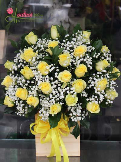Hộp hoa hồng vàng kết hợp baby