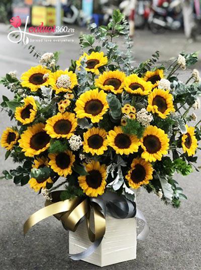 Hộp hoa hướng dương - Nắng bên hiên