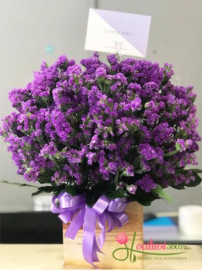 Hộp hoa salem tím tuyệt đẹp