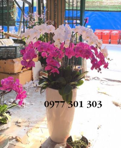 Chạu lan hồ điệp - Lộc tiến vinh hoa