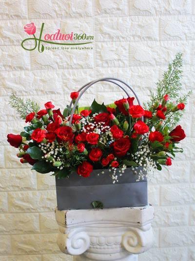 Hoa giáng sinh - Món quà giáng sinh