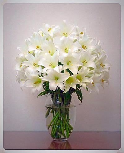 Nguồn gốc, ý nghĩa và lợi ích hoa huệ mang lại