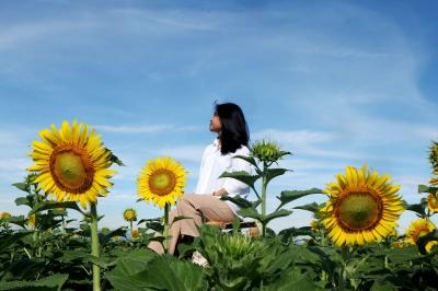 Những câu nói mang lại cảm xúc về hoa hướng dương hay ý nghĩa