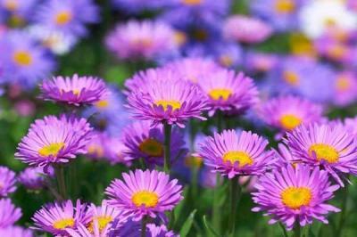 Những loài hoa mùa thu đẹp nhất