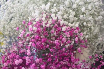 Phát sốt với mẫu hoa baby cầu vồng siêu ấn tượng