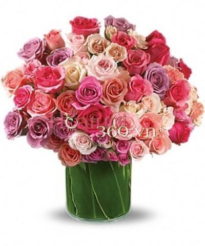 Rose Rapture_Hoa Tươi 360