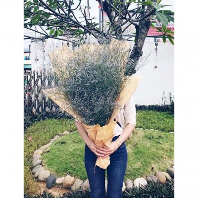 Hoa sao tím - Vẻ đẹp giản dị