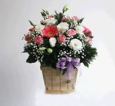 Hộp hoa Sức sống mới