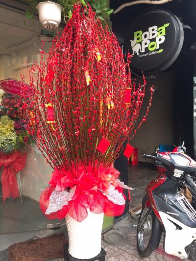 Bình hoa tầm xuân - Tầm xuân khổng lồ