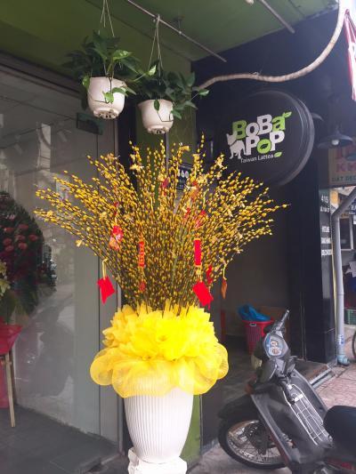 Bình hoa tầm xuân - Tầm xuân vàng khoe sắc
