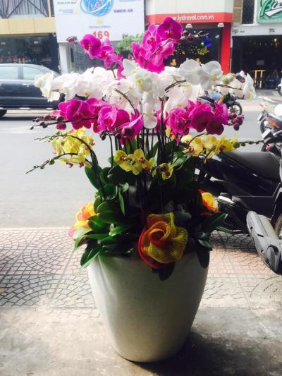 Bình hoa lan hồ điệp kết hợp tuyệt đẹp