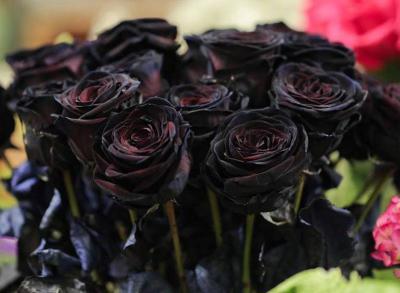 Tìm hiểu các loài hoa màu đen quý nhất hiện nay
